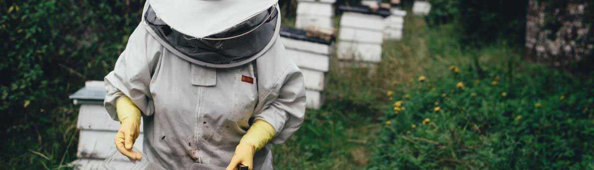 apiculteur etudes
