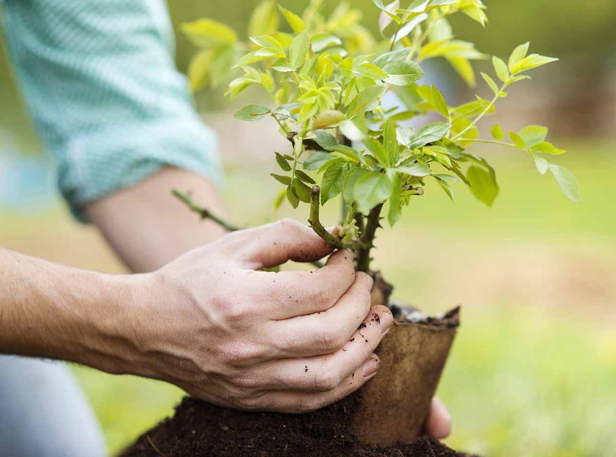 Fiche metier arboriculteur