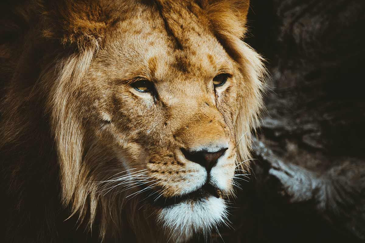 Soigneur animalier soigneuse animali re m tier tudes for Immagini leone hd
