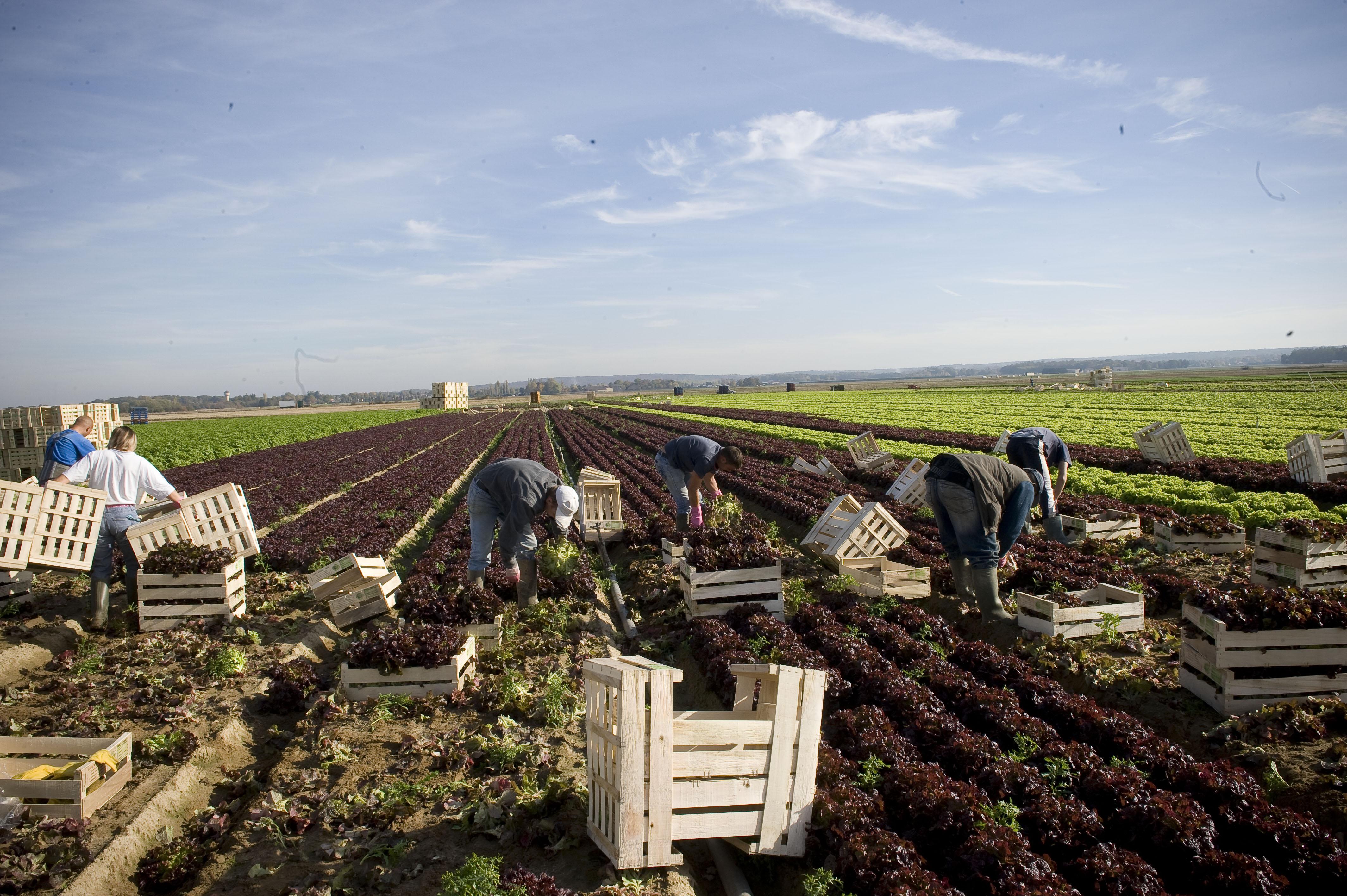 ouvrier    ouvri u00e8re agricole   m u00e9tier   u00e9tudes  dipl u00f4mes  salaire  formation