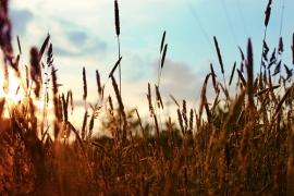Travailler dans l'agriculture : 6 conseils de professionnels