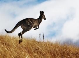 Visa Australie et autres formalités à régler avant votre départ