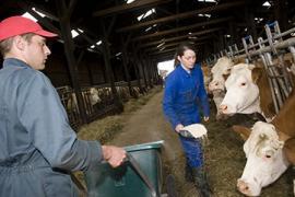 Chef d'exploitation laitière