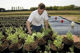 BTSA APV - Agronomie : productions végétales