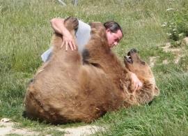 Travailler avec les animaux : ces métiers qui vous font rêver
