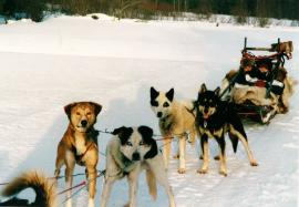 Etudes à l'étranger : l'aventure polaire de Gaétan