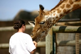 Comment devenir soigneur animalier ?