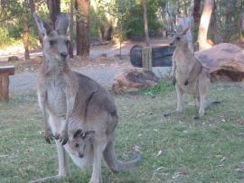 Travailler en Australie : un Visa Vacances Travail sans quota mais plus de candidats pour les jobs