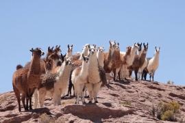 Le programme vacances travail pour le Chili est ouvert