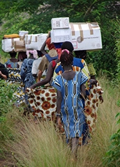 Logisticien humanitaire