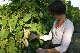 Oenologues, sommeliers, viticulteurs... Des métiers variés qui recrutent en France et à l'étranger