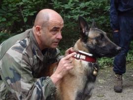 Travailler avec les chiens : de l'animal de compagnie au chien d'utilité