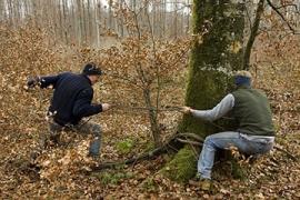 Journée internationale de la forêt
