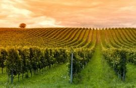 Maître de chai : de la vigne au vin