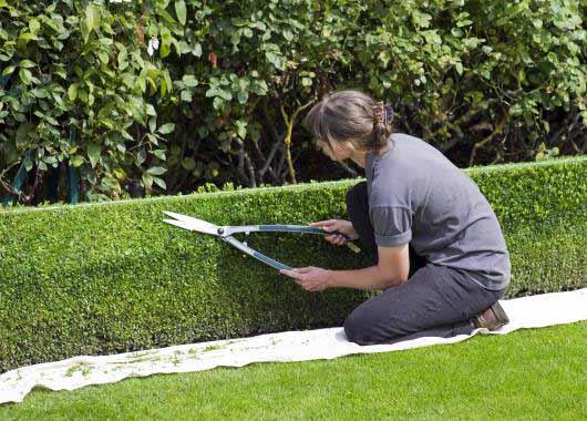 jardinier paysagiste un m tier d 39 ext rieur recherch cidj
