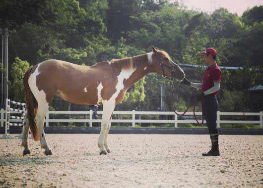 Offre d emploi moniteur d'activites equestres