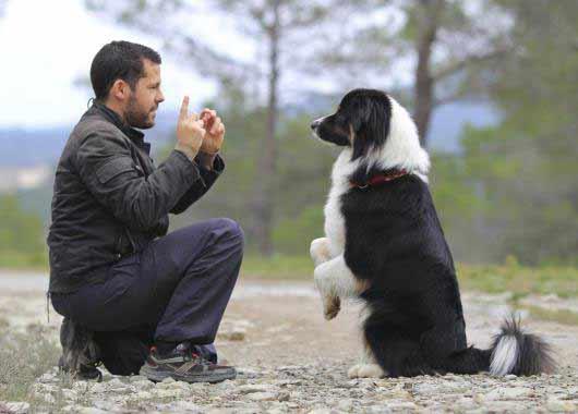 Educateur Canin Educatrice Canine M 233 Tier 233 Tudes