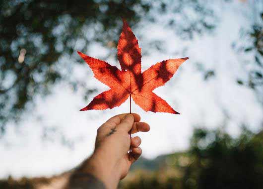 Comment Trouver Un Emploi Au Canada Cidj