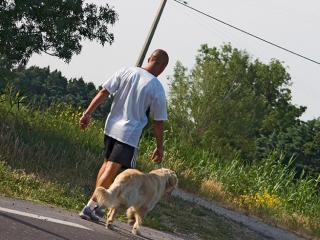 Maître-chien : métier, études, diplômes, salaire